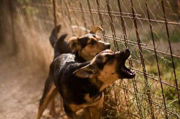 cddea61b3287 Μήνυμα μας απέστειλε αναγνώστρια σχετικά με τα σκυλιά του νέου τους  γείτονα. Σας παραθέτουμε το κείμενο αυτούσιο